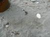 Fusto sabbia intorno